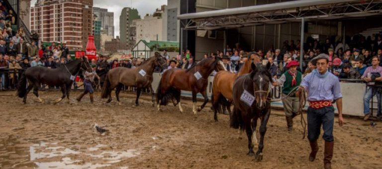 2017 Resultados 131va. Expo Palermo