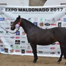 2017 Resultados Expo San Carlos