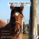Charla Práctica de morfología en Minas