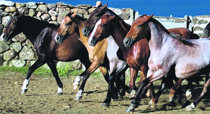 Prohíben temporalmente ingreso y salida de equinos