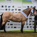 Una yegua de cabaña Septiembre fue la mejor en la raza Criollos