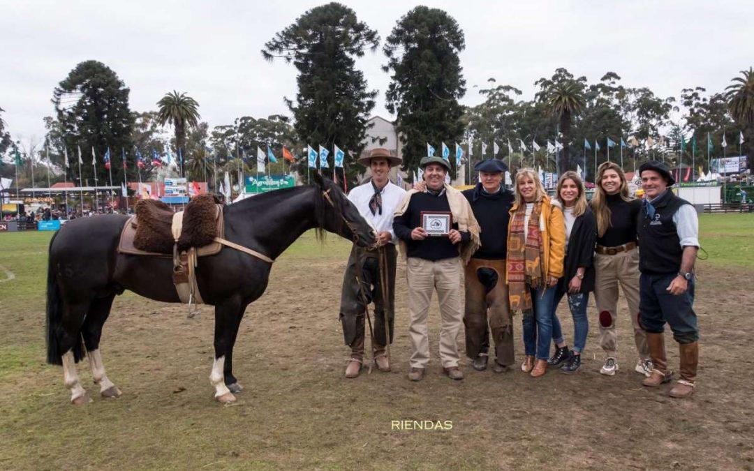 Expo Prado 2019 – Resultados Paleteadas Brasileras